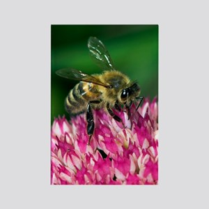 Honey bee feeding on Sedum flower Rectangle Magnet